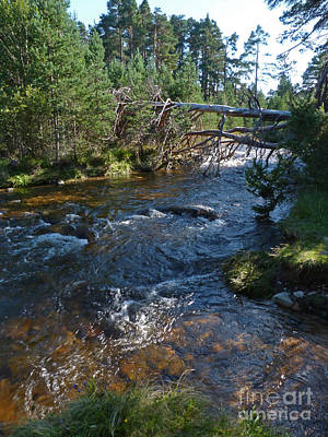 Photograph - River Nethy - Abernethy Forest by Phil Banks