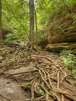 Photograph - River Of Roots by Coby Cooper
