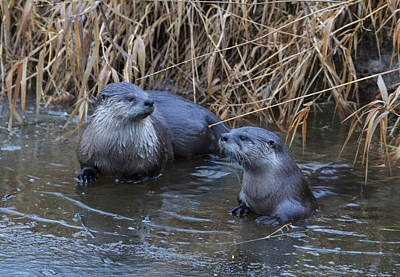 Photograph - River Otters by Angie Vogel