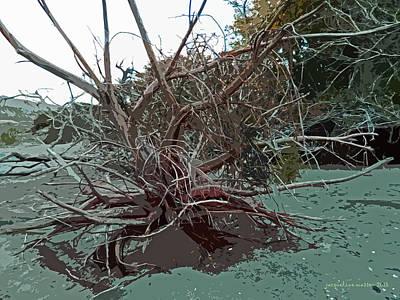 Photograph - River Roots by Jacqueline  DiAnne Wasson