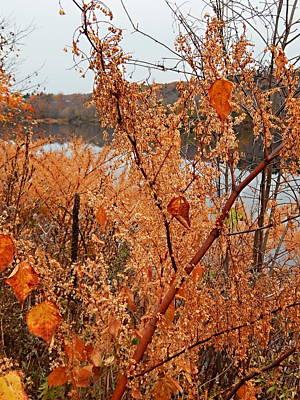 Photograph - River Side Foliage Autumn by Expressionistart studio Priscilla Batzell