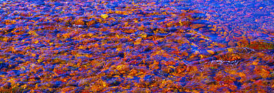Photograph - River Song Abstract by Karen Cade