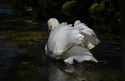 Achieving - River Swan by Linda Kerkau