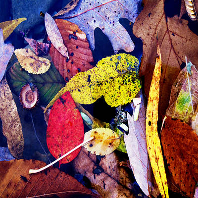 Acorn Digital Art - River Tea by David Walker