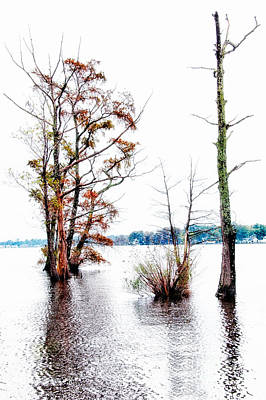 River Trees - Elizabeth City Nc Art Print by Dan Carmichael
