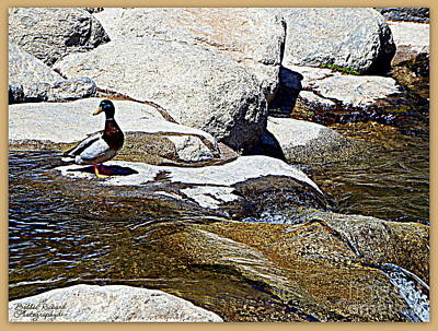 Photograph - River Visitor by Bobbee Rickard