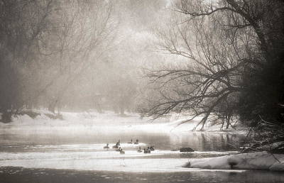 Photograph - Riverbank Morning by Alan Norsworthy