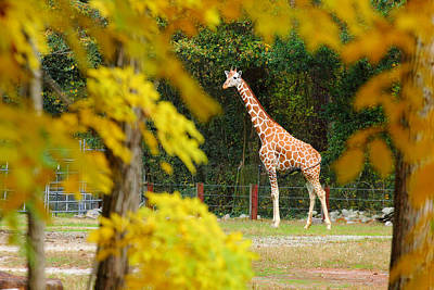 Photograph - Riverbanks Zoo 1 by Joseph C Hinson Photography