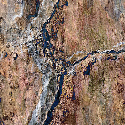 Photograph - Riverbark by Stephanie Grant