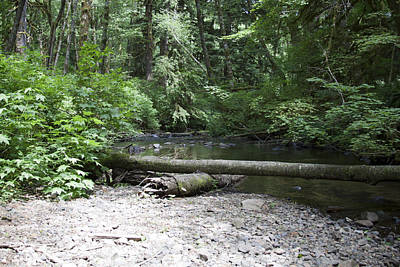 Photograph - Rivers-streams-creeks - 0044 by S and S Photo