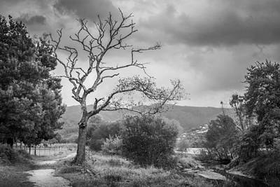 Photograph - Riverside Tree by Gary Gillette