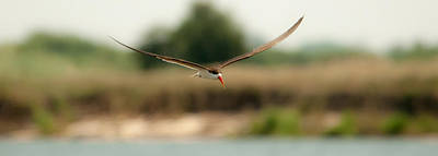 Photograph - Riverwing by Alistair Lyne