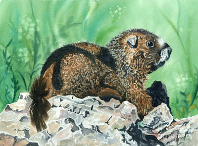 Rmbl Marmot Art Print by Barbara Jewell