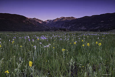 Rmnp Moraine Park Flora Sunrise Art Print by Tom Wilbert
