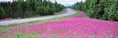 Ak Photograph - Road Ak by Panoramic Images