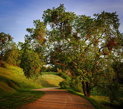 Dirt Roads Photograph - Road By The Tree by Sarit Sotangkur