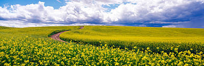 Road, Canola Field, Washington State Art Print by Panoramic Images