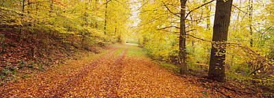 Fallen Leaf Photograph - Road Covered With Autumnal Leaves by Panoramic Images