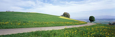 Pear Tree Photograph - Road Fields Aargau Switzerland by Panoramic Images