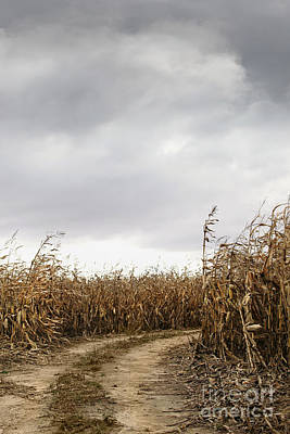 Photograph - Road Going Into Corn Fields by Sandra Cunningham