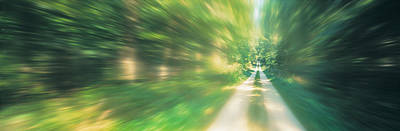Dirt Roads Photograph - Road, Greenery, Trees, Germany by Panoramic Images