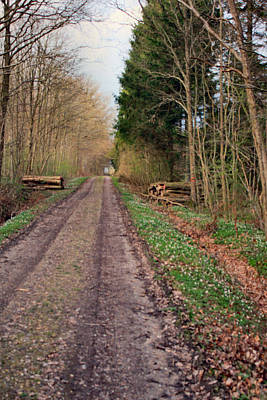 Digital Art - Road In Stakrode Forest by Asbjorn Lonvig