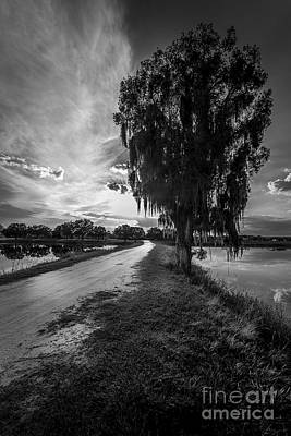 Road Into The Light-bw Art Print