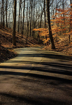 Photograph - Road Into The Woods by Diana Boyd