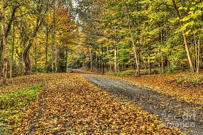 Road Into Woods Art Print