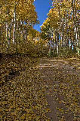 Photograph - Road Of Color  by Eric Rundle