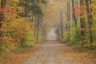 Dirt Roads Photograph - Road Passing Though Forest In Autumn by Panoramic Images