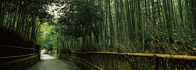 Road Passing Through A Bamboo Forest Art Print
