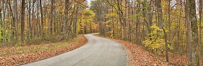 Road Passing Through A Forest, Brown Art Print by Panoramic Images