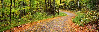 Fallen Leaf Photograph - Road Passing Through A Forest, Country by Panoramic Images