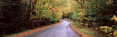 Fallen Leaf Photograph - Road Passing Through A Forest, Green by Panoramic Images