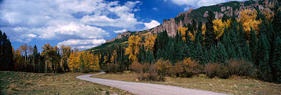 Dirt Roads Photograph - Road Passing Through A Forest, Jackson by Panoramic Images