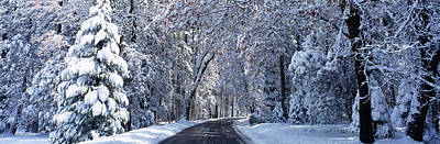 Cold Temperature Photograph - Road Passing Through Snowy Forest by Panoramic Images