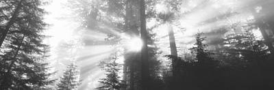 Road, Redwoods Park, California, Usa Art Print by Panoramic Images