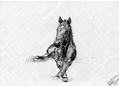 Drawing - Road Runner by Melita Safran
