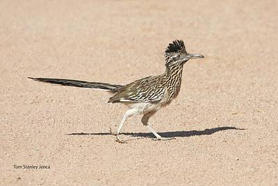 Art Print featuring the photograph Road Runner On The Road by Tom Janca