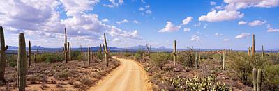 Dirt Roads Photograph - Road, Saguaro National Park, Arizona by Panoramic Images