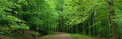 Dirt Roads Photograph - Road Through A Forest Near Kassel by Panoramic Images