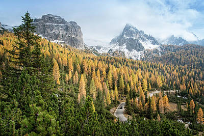 Photograph - Road Through A Larch Conifers Forest by Thomas Winz