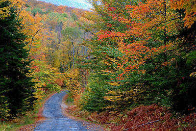 Art Print featuring the photograph Road Through Autumn Woods by Larry Landolfi