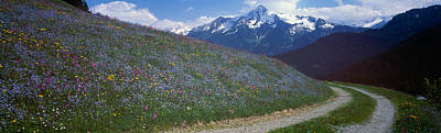 Flower Blooms Photograph - Road Through Hillside, Zillertaler by Panoramic Images