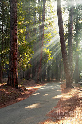 Pine Needles Photograph - Road Through Mariposa Grove by Jane Rix