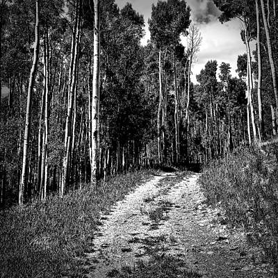 Photograph - Road Through The Aspen - Photography by Ann Powell
