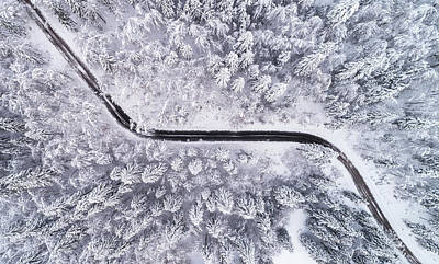 Hoarfrost Photograph - Road Through The Winter Forest by Ales Krivec