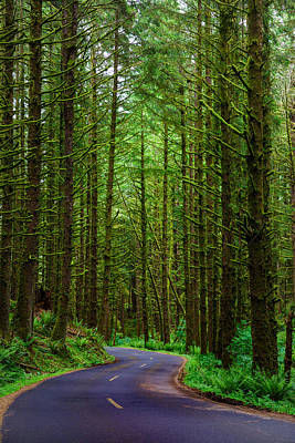 Photograph - Road Through The Woods by Rick Berk