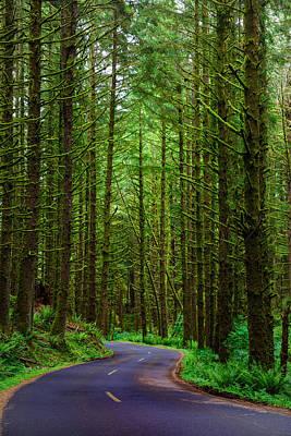 Shamrock Photograph - Road Through The Woods by Rick Berk